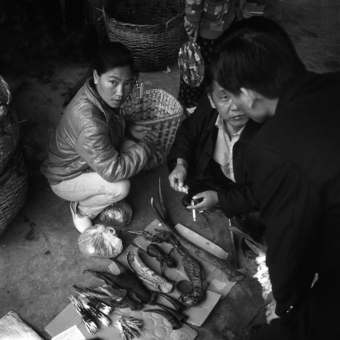 Chinese customers inspect tiger teeth in Mong La, Special region 4, Wa State Myanmar. Copyright © Adam Oswell