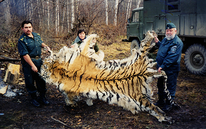Siberian tiger confiscation, Russian far east.