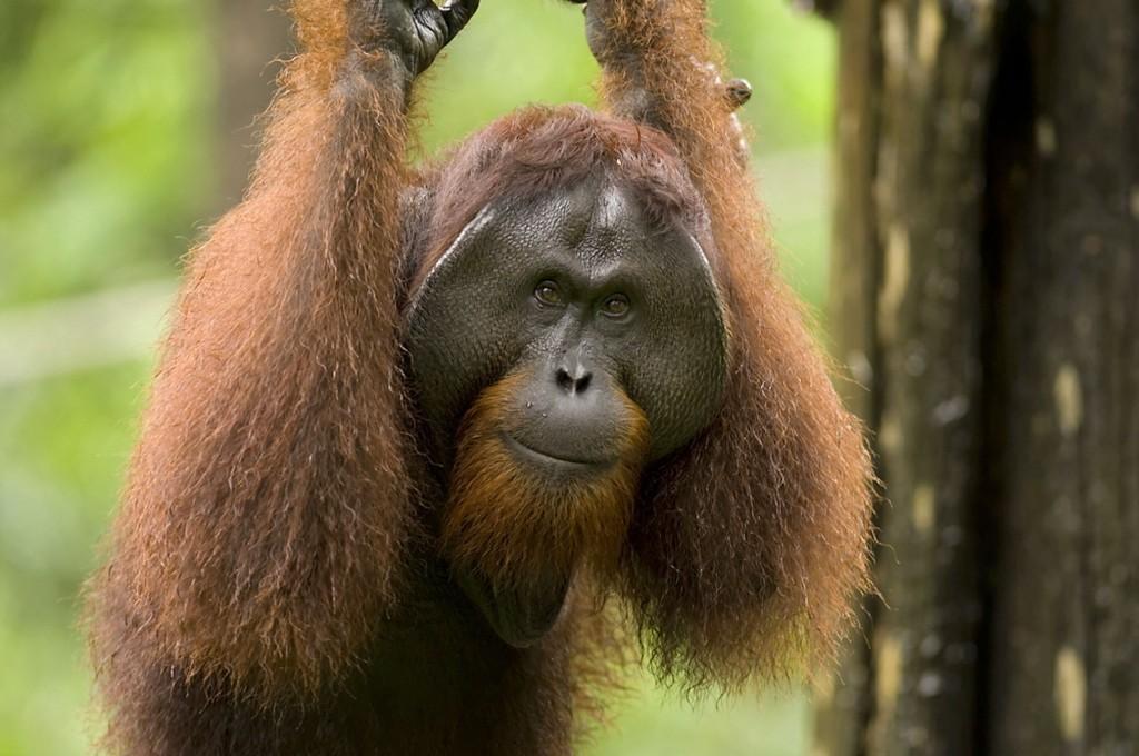 11_overview_orangutan_DxO