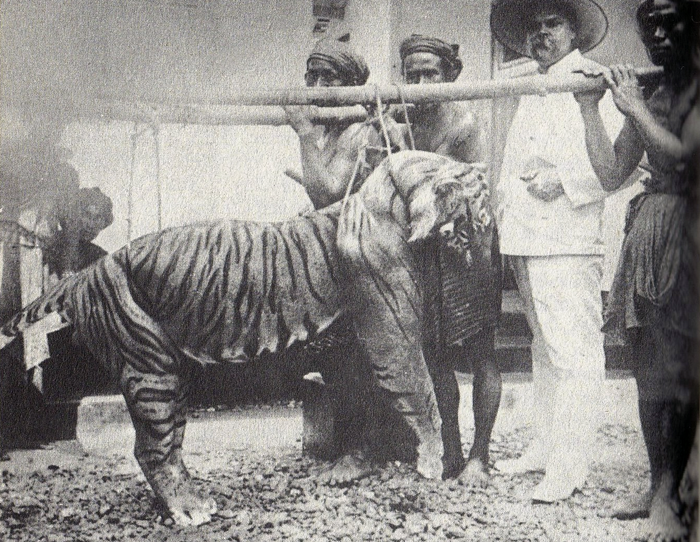 Balinese tiger and Dutch trader.