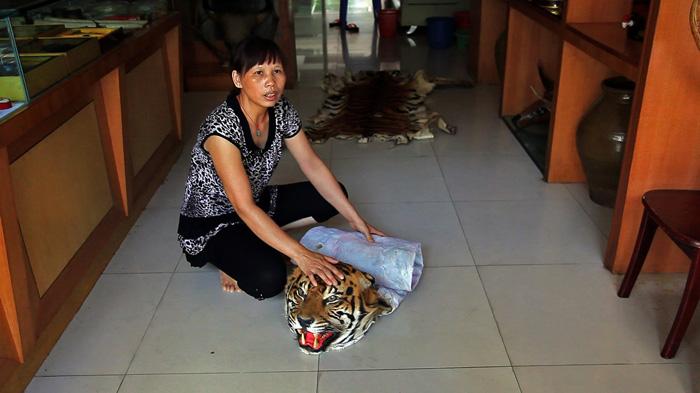 Mong La Tiger 1