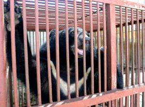 Laos' special economic zone a black hole for illegal wildlife trade