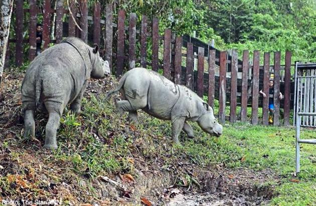 20150417_rhinos_Thestar