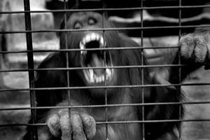 Black Market Wildlife Trade
